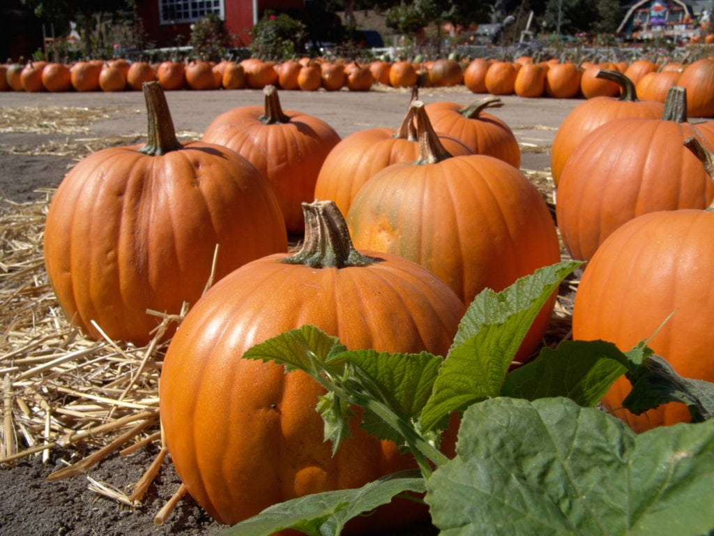 Palliative Care in Philadelphia PA: Tasty Seasonal Treats for Extra Nutrition This Autumn
